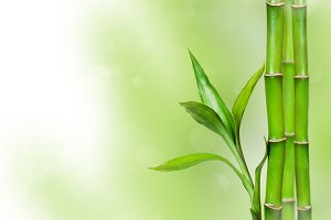 Green background with bamboo leaves