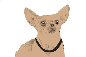 Vector illustration of Chihuahua dog