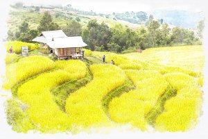rice farm watercolor