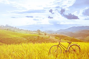 vintage bicycle on rice farm