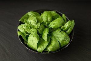 Fresh juicy green basil herb