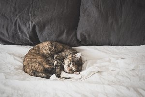 Lazy Cat on a Bed