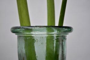 calla lily branches