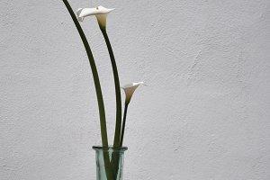 calla lily in glass vase