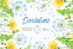 Dandelions. Floral Collection