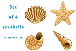 Set of 4 beautiful seashells