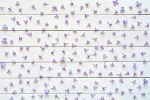 Pattern of lilac flowers on white