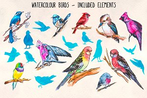 20 Colorful Bird Watercolor Graphics