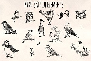 16 Bird Sketch Elements Vector Kit