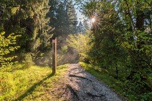 Natural park of Zelenci in Slovenia