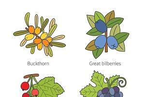 Doodle berries