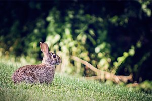 Hey there Bunny Rabbit