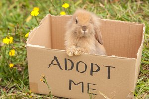 Little bunny in adoption