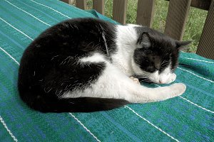 Cat sleeping in patio outside the house