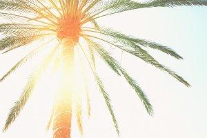 palm tree  and sunshine