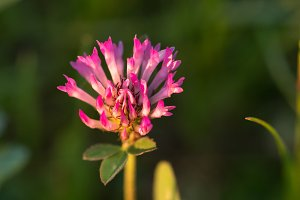 Pink flower in the grass