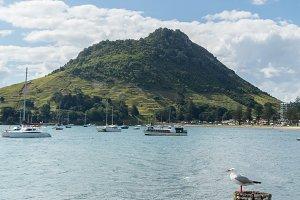 The Mount in Tauranga New Zealand