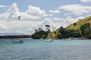 Bay and harbor at Tauranga NZ