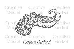 Octopus seafood tentacle hand drawn