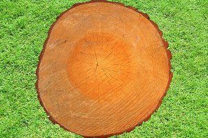 Wood section with growth rings in grass