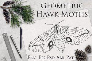 Geometric Hawk Moths