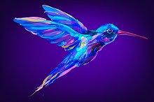 Colibri (Birds set. Vector)
