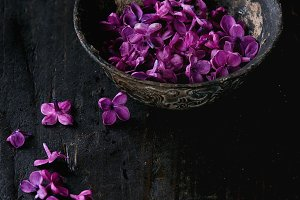 Bowl of lilac flowers