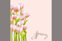 Flower tulip background.