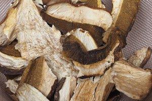 Porcini mushroom detail