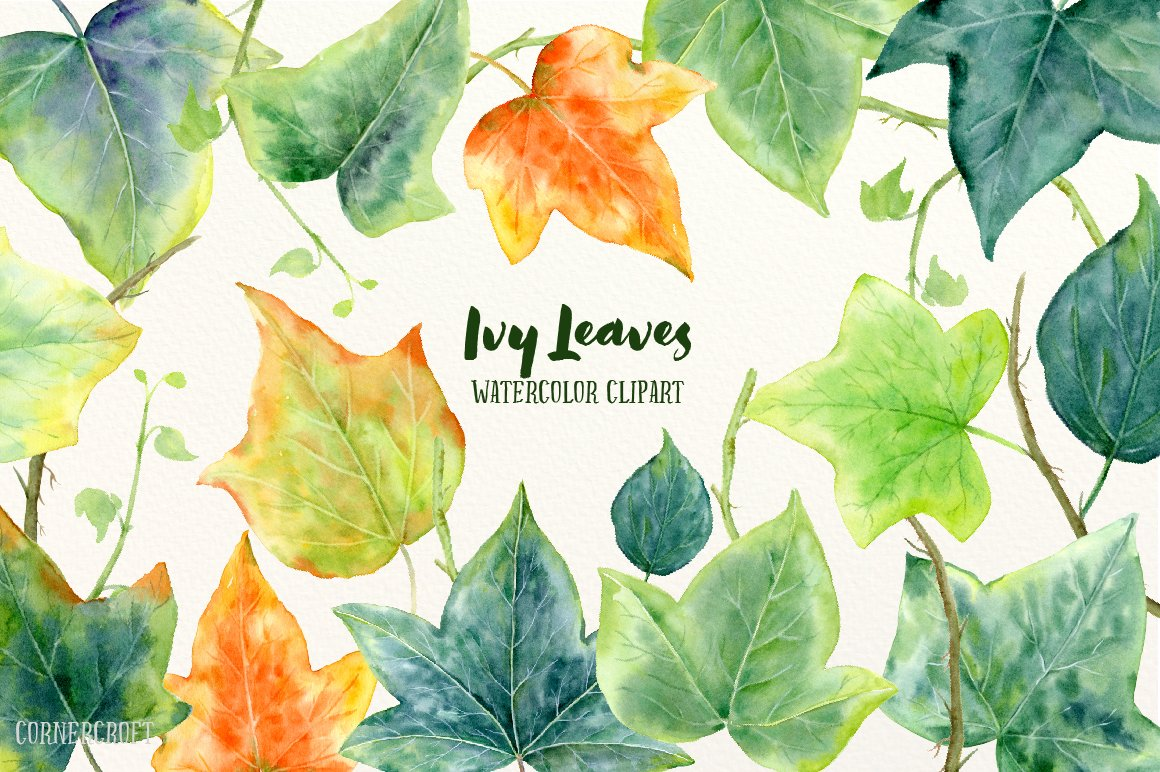 Watercolor ivy leaf illustration illustrations creative market biocorpaavc Gallery