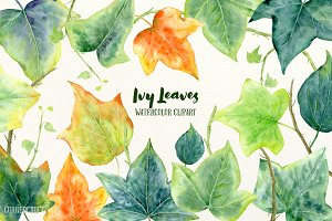 Watercolor Ivy Leaf Illustration