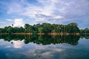 Cambodian Forest