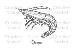 Shrimp, prawn hand drawn vector