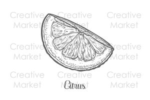 Citrus hand drawn illustration