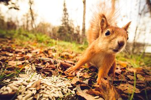 Funny Squirrel animal in forest