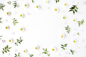 Floral frame with chamomile