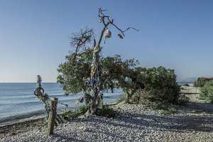 El árbol de las chanclas