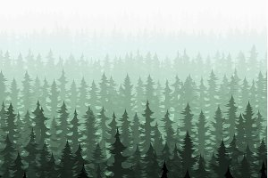 Nature forest pine trees
