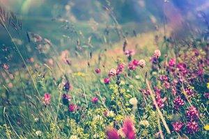 Blooming Flowers Spring Summer