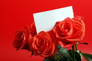 red roses with card