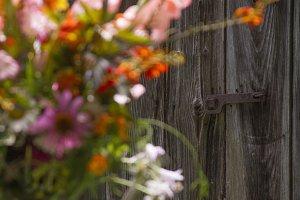 Weathered barn door and flowers