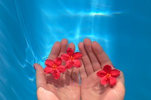 hands with flowers in water