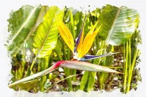 watercolor bird paradise