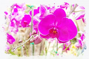 Orchid flower watercolor effect.