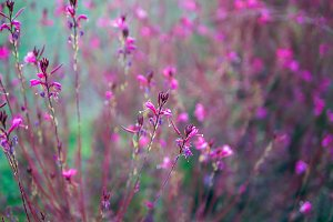 Pink flowers abstraction