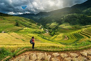 Traveller take picture Rice fields