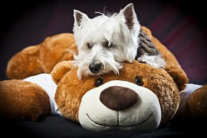 Pet and your friend Teddy