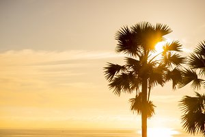 Palm tree at tropical sea and beach