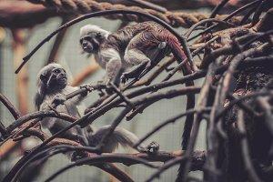Little Monkey Hanging on a Tree