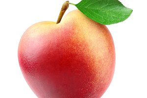 One isolated nectarine peach